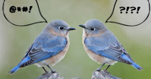 2 birds tweeting at each other with speech bubbles. One bird's speech bubble suggests bad language